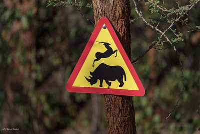 Watch out for free roaming Rhino's