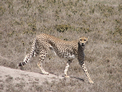 Tanzania, Ngorongoro Crater, 2006