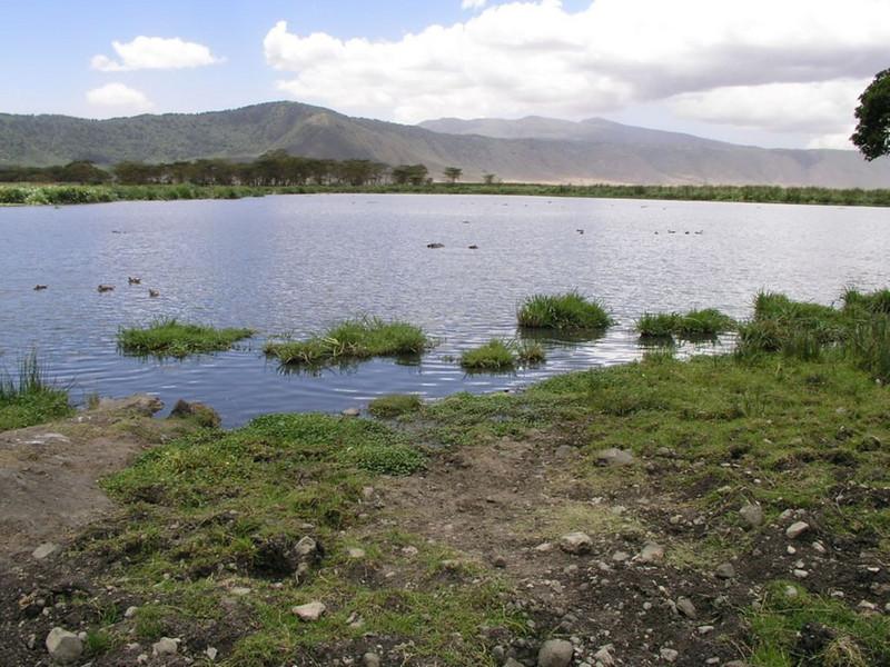 Habitat of Milvus migrans