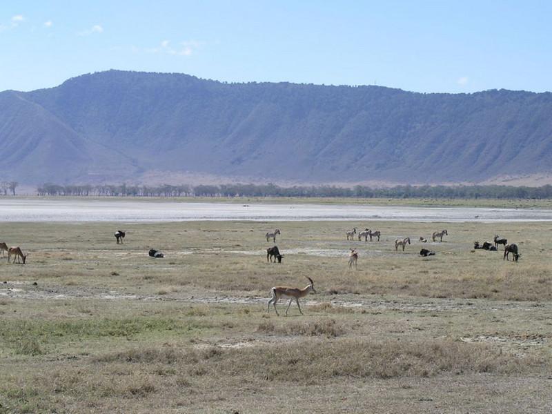 Mammals on the savanna around Salt-Lake