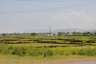Rice fields near Mto Wa Mbu