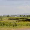 Rice fields near Mto Wa Mbu
