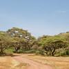 Lake Manyara game drive circuit