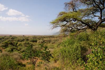Panorama Lake Manyara