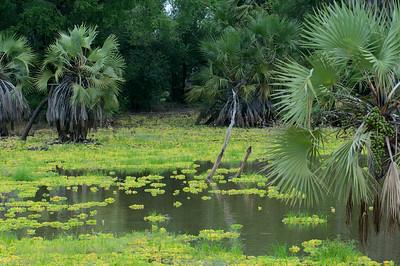 Marsh in Selous