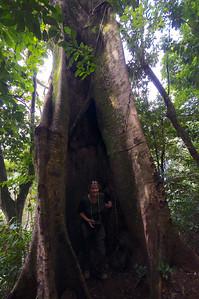 Udzungwa Mountains, Communication Tree