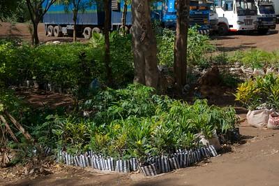 Garden centre near Moshi