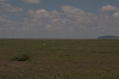 Fata Morgana at Serengeti