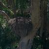 Close-up of Hamerkop nest