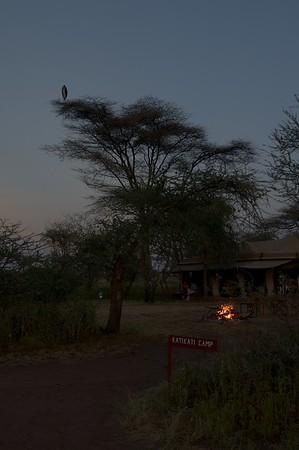 Marabou watching over Kati Kati Tented Camp