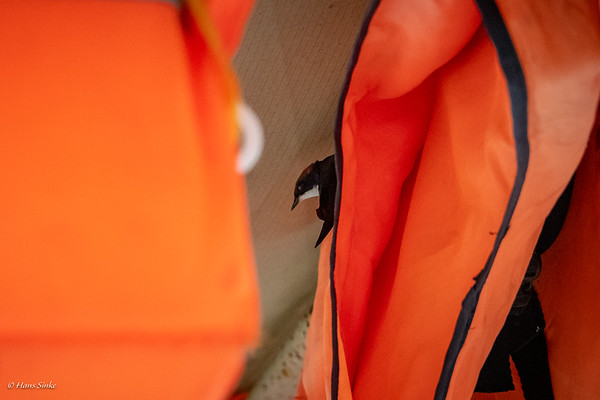 This barn swallow was flying with us during the trip and found a place between the life jackets!