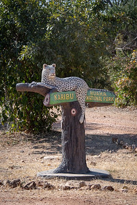 Finally we arrive at the main gate of Ruaha NP and are welcomed by a leopard.