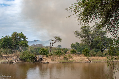 They use  controlled fires in early dry season to prevent large forest fires later.