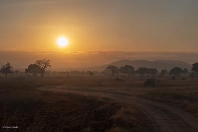 Mikumi National Park at dusk