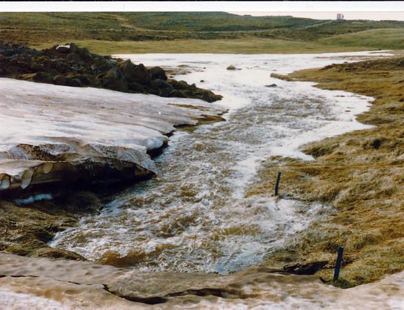 Vatnavextir í Reykjavík