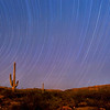 Saguaro Star Trails