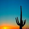 Saguaro and sun flare