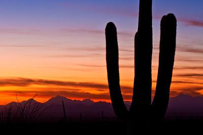 Arizona Romance