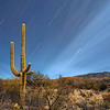 Saguaro and star trails