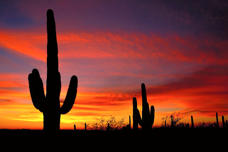 Sunset in Saguaro