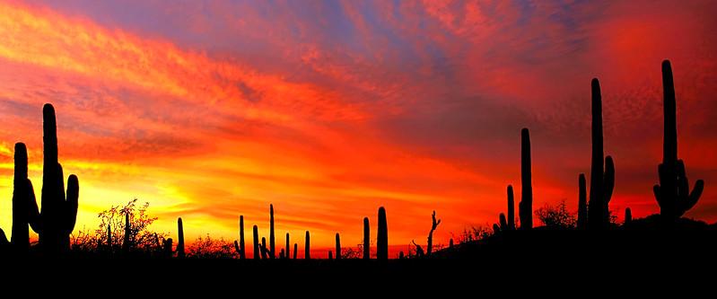 Saguaro orange sky panoramic