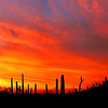 Saguaro orange sky panoramic