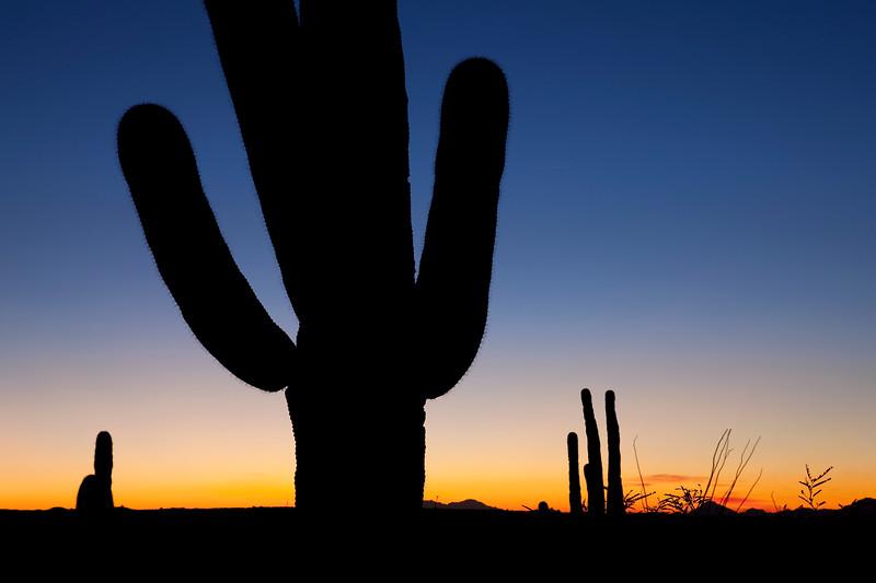 Clear Saguaro Sunset Horizontal