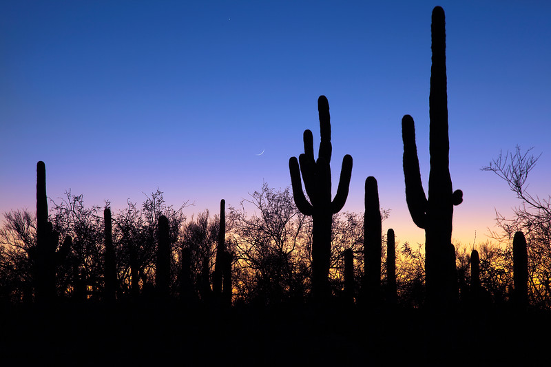 Saguaro sunset with moon sliver