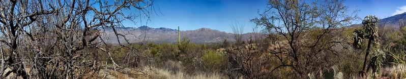Saguaro National Park East, Tuscon, Arizona