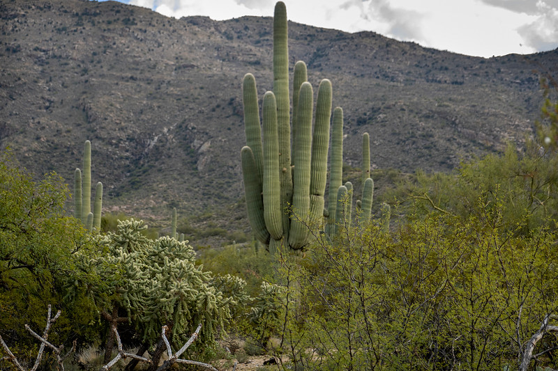 Saguaro National Park East,  Tucson, Arizona