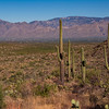 The Catalina Mountains from Tanque Verde Ridge