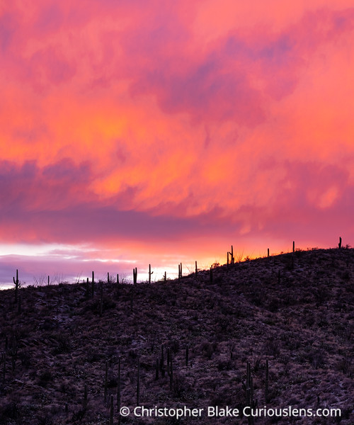 Red Clouds and Saguaros