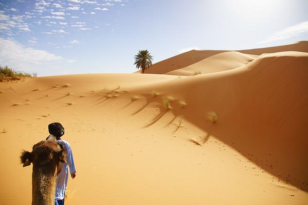 Morning Camel Trek