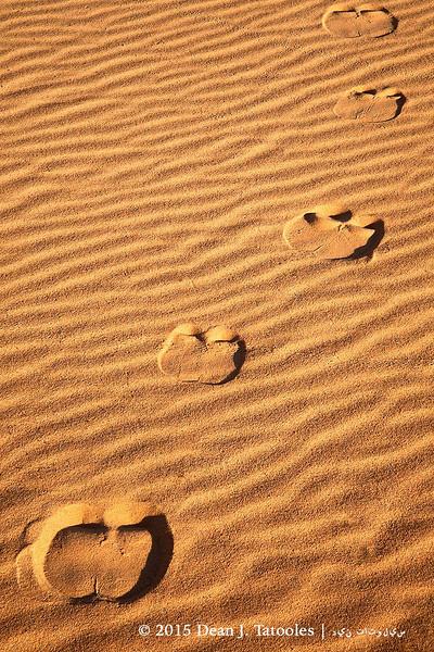 Camel Footprints
