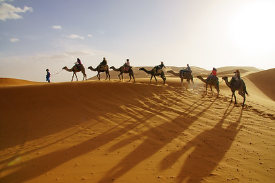 Camels, Camels, and More Camels