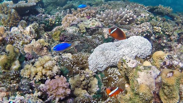coral nemo 2