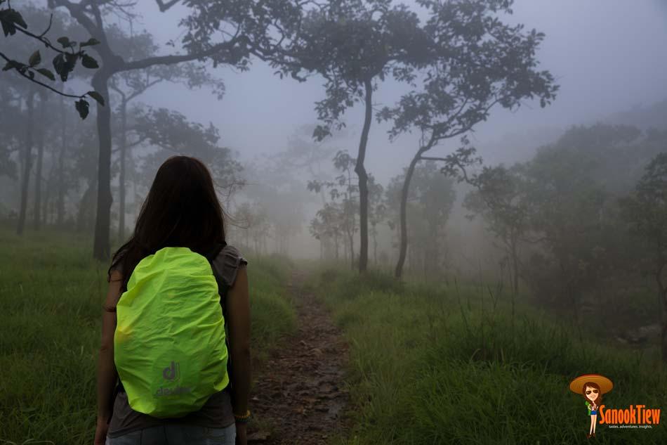 ทางเดินใน ทุ่งบัวสวรรค์ อุทยานแห่งชาติไทรทอง