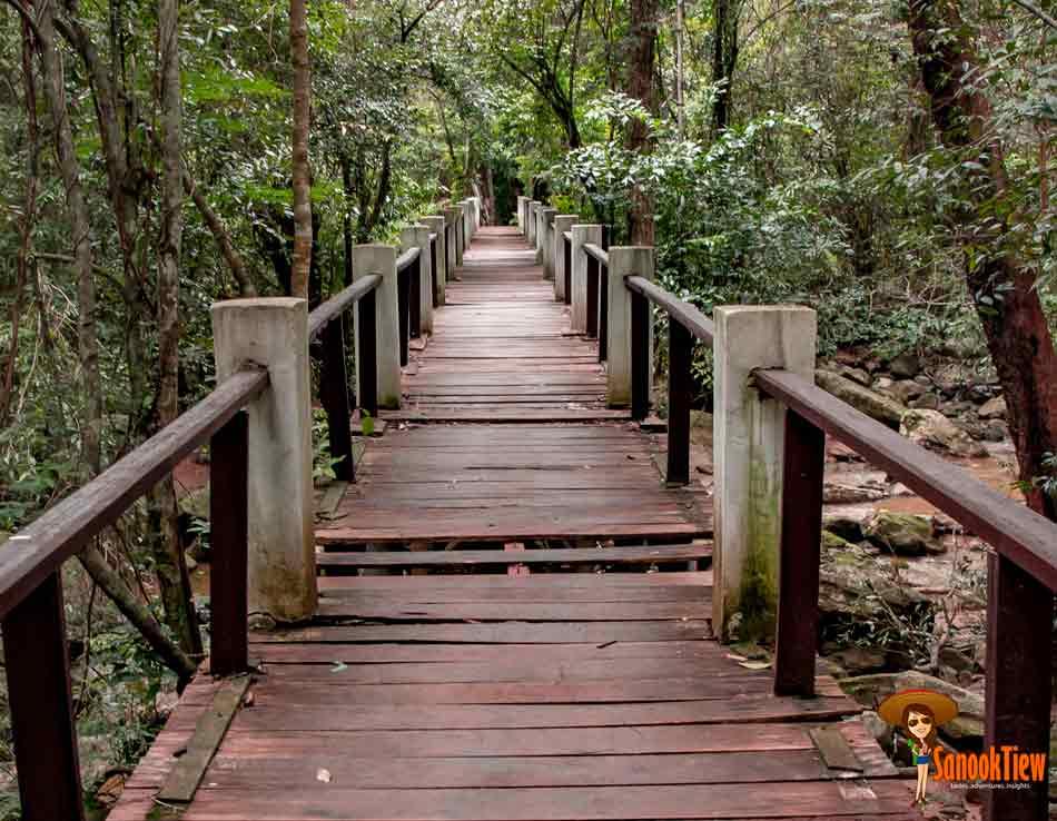ทางไปชม ต้นไม้พันปี อุทยานแห่งชาติไทรทอง