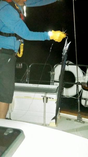 John Harold Koh-Ring Stick Fish