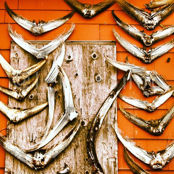 Tails up with @captmarciano @HardmerchNancy @wickedtuna #wickedtuna #natgeo #tuna #fishing #gloucester