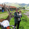 Leon meets stag in Arnisdale