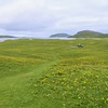 Looking east to where we anchored in Vatersay across the last of the machair flowers