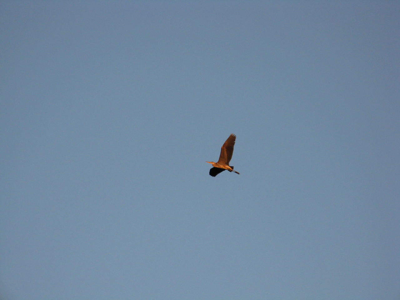 A heron flew over us while we were standing on the beach at Washington Park.