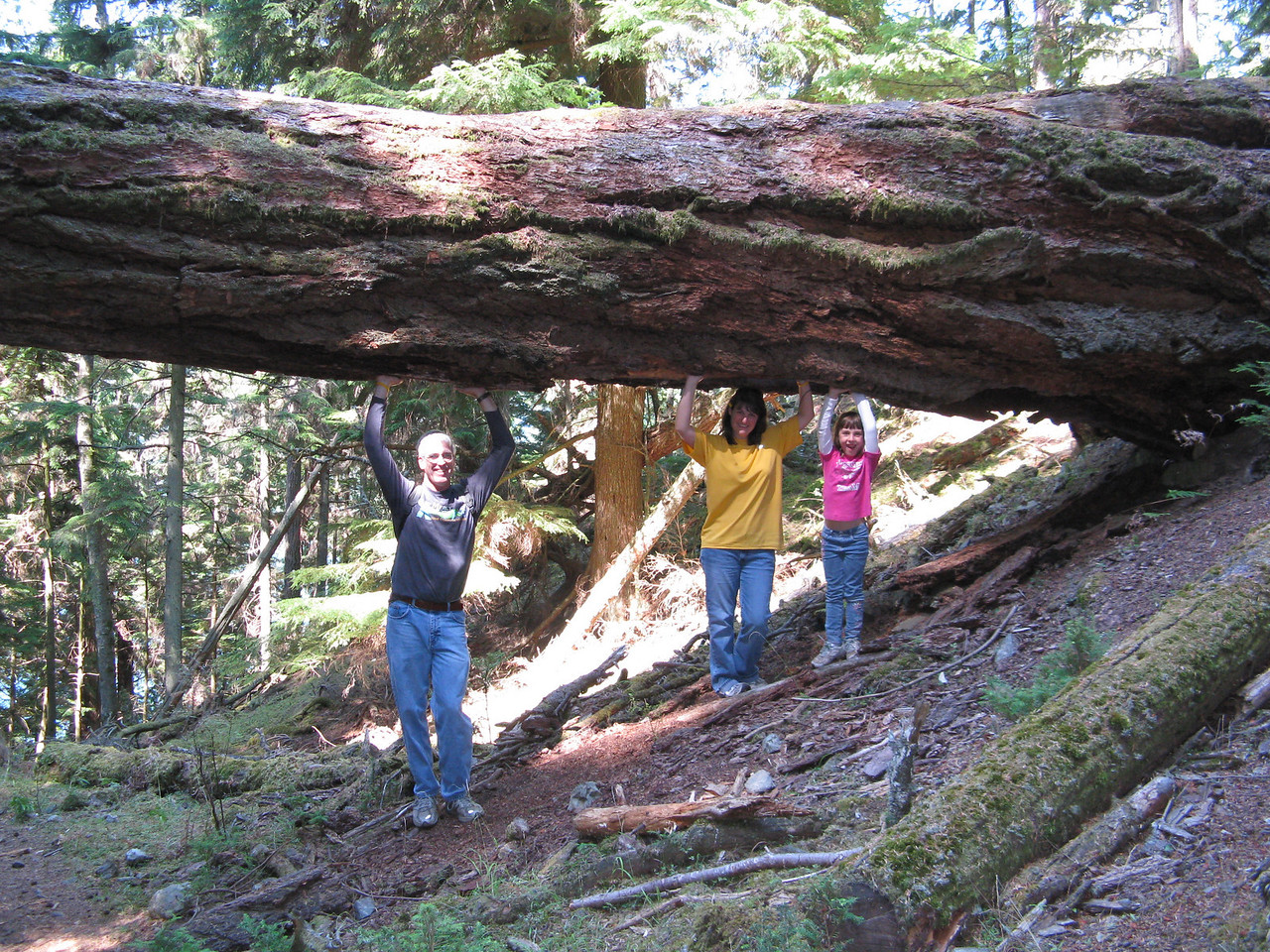 Woah ... This tree is heavy!  Glenn, Sonia and Abby holding up a tree that has nearly fallen on the trail.  We hiked around Mountain Lake in Moran State Park on Orcas Island on Saturday.