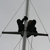 In time-honored tradition, the youngest crewman gets to do the work at the top of the mast...