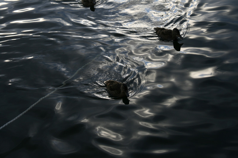 The ducklings as it got later