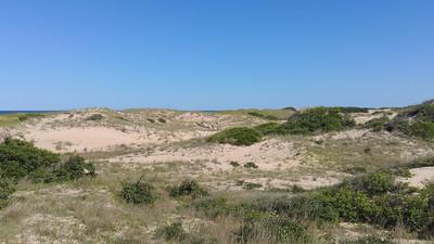 The dunes at Back Bay National Wildlife Refuge