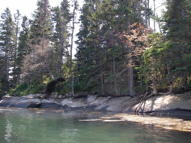 And another… White Islands, Penobscot Bay, Maine.  August, 2012.  Photo: Shemaya Laurel <br /> The photos don't do it justice, but the moss, of varying kinds all through the forest, was extraordinary.
