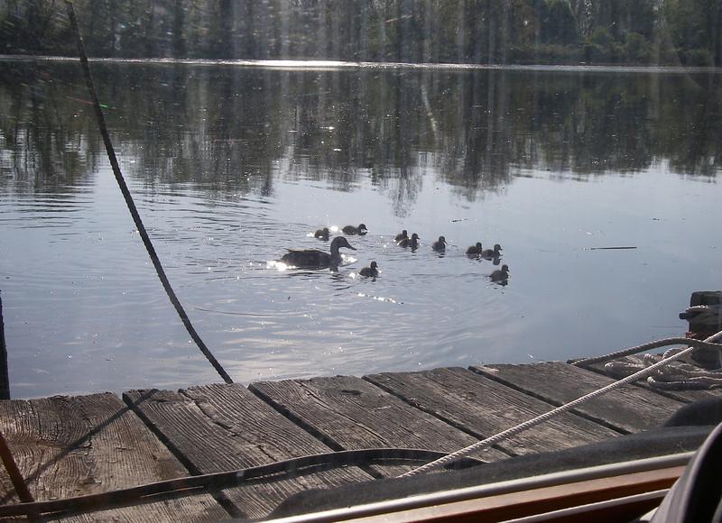 Connecticut River, Warren and Margo's dock.  Photo: Shemaya Laurel