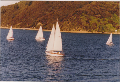 Port tack racing in the Marlborough Sounds.